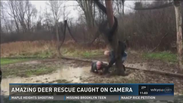 Geauga County tense deer rescue