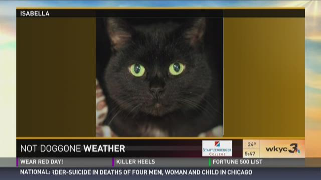 Not Doggone Weather: Isabella and Tiger