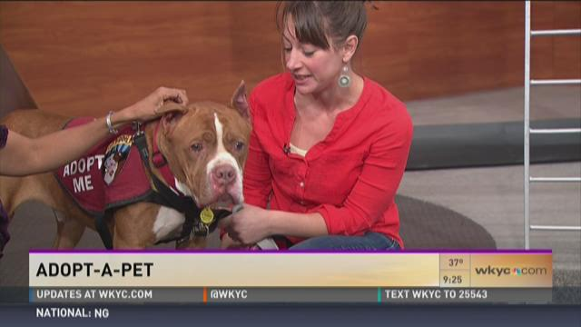 Adopt-A-Pet: Meet Woods!