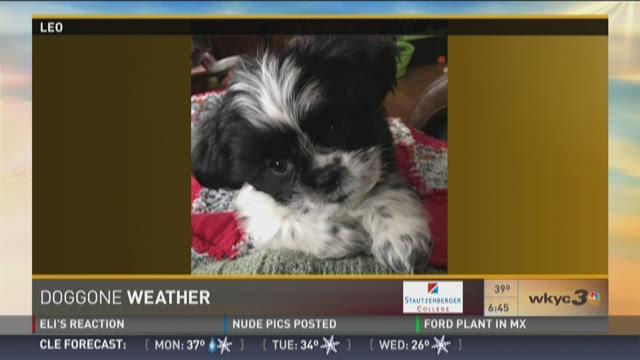 Doggone Weather: Leo