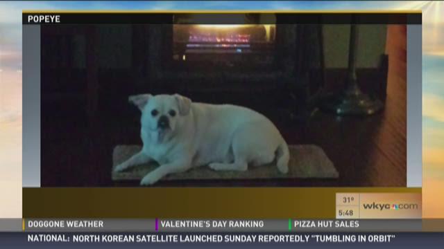 Doggone Weather: Popeye