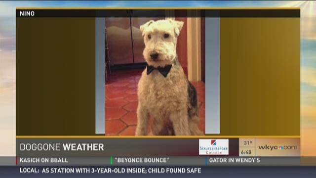 Doggone Weather: Nino