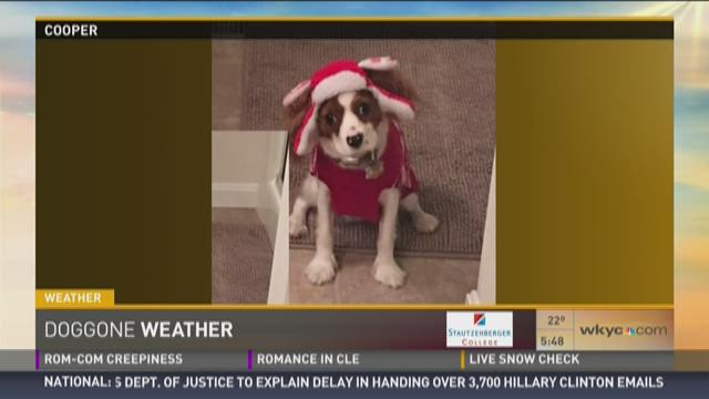 Doggone Weather: Cooper