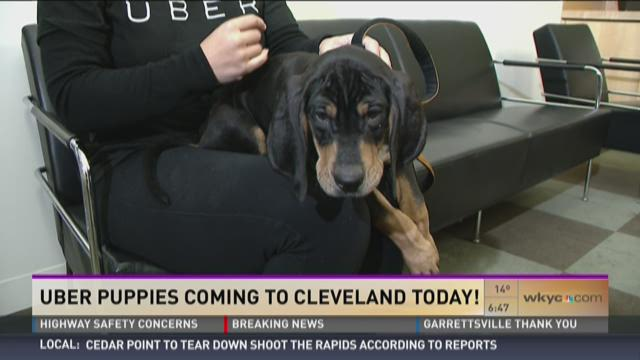 Not Doggone Weather: Uber Puppies