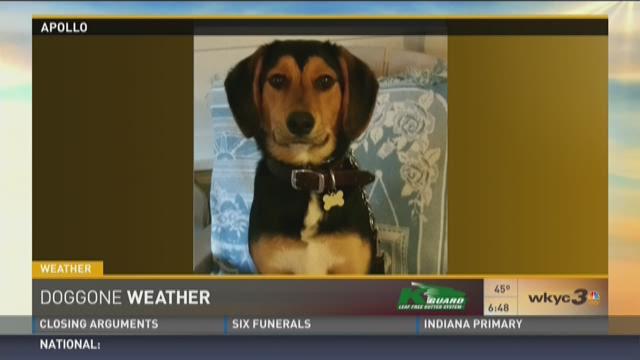 Doggone Weather: Apollo