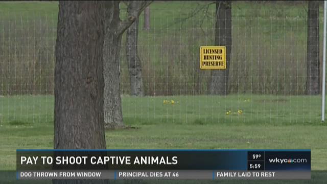 Pay to shoot captive animals