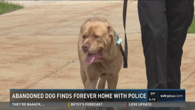 Abandoned dog finds forever home with police