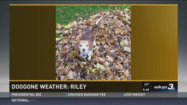 Doggone Weather: Riley