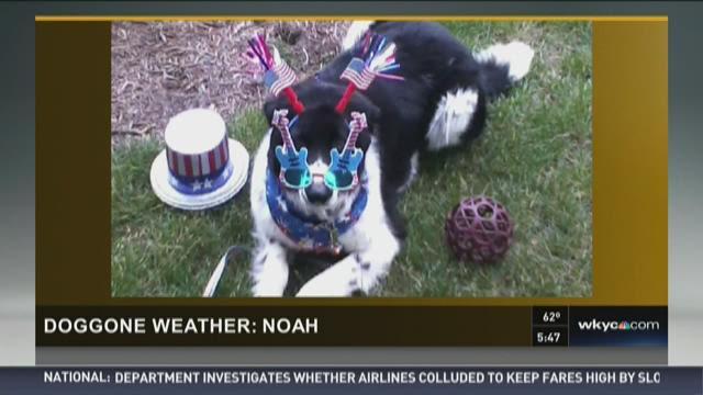 Doggone Weather : Noah