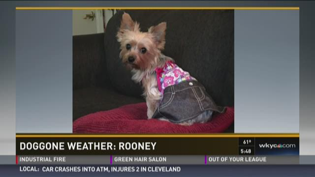 Doggone Weather: Rooney