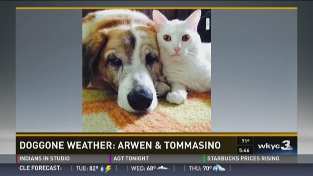 Dog Gone Weather: Arwen and Tommasino