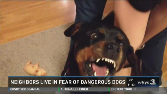 Neighbors live in fear of dangerous dogs
