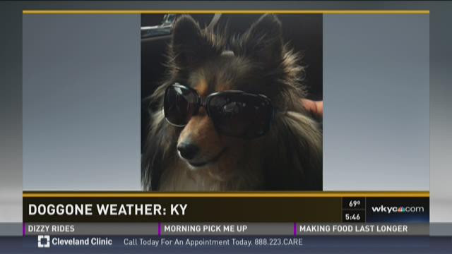 Doggone Weather: KY