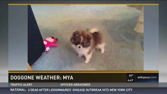 Doggone Weather: Mya