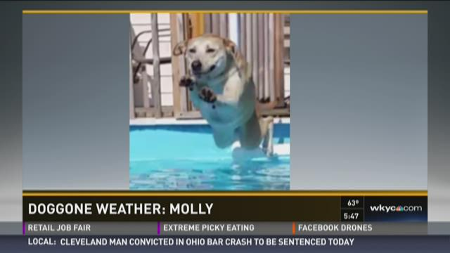 Doggone Weather: Molly