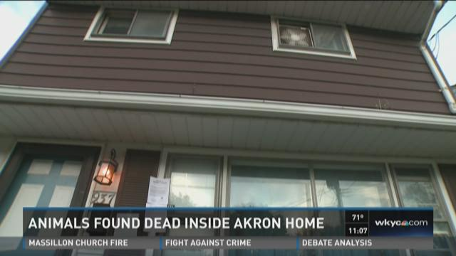 Neighbor: Akron animal hoarder dug graves outside