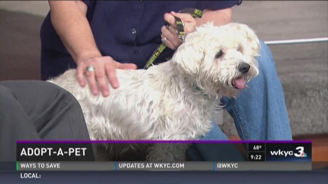 Adopt-A-Pet- Sanctuary for Senior Dogs