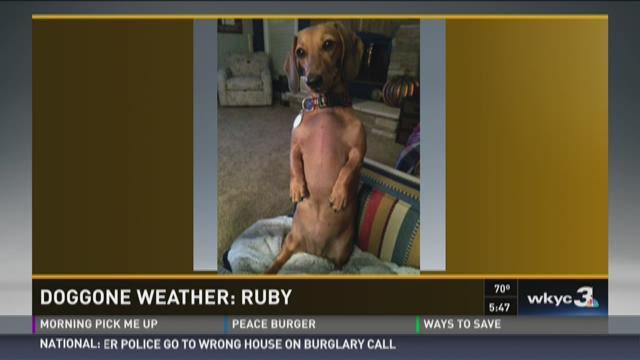 Doggone Weather: Ruby