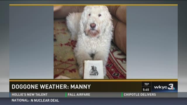 Doggone Weather: Manny