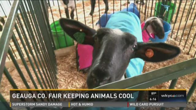 Keeping animals cool at the Geauga County Fair