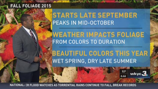 Fall Foliage Sunday
