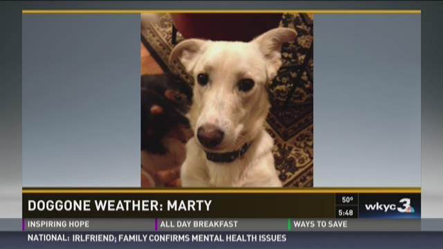 Doggone Weather: Marty