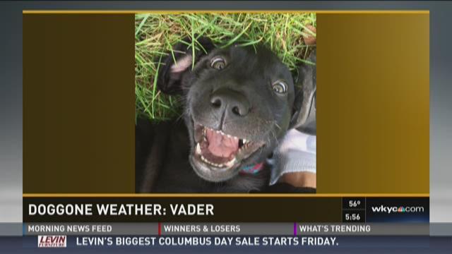 Doggone Weather : Vader