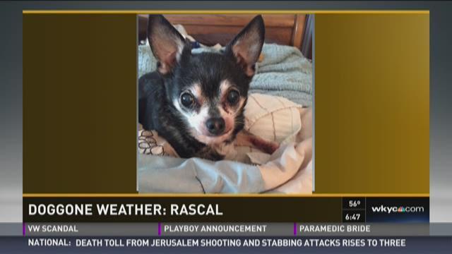 Doggone Weather: Rascal
